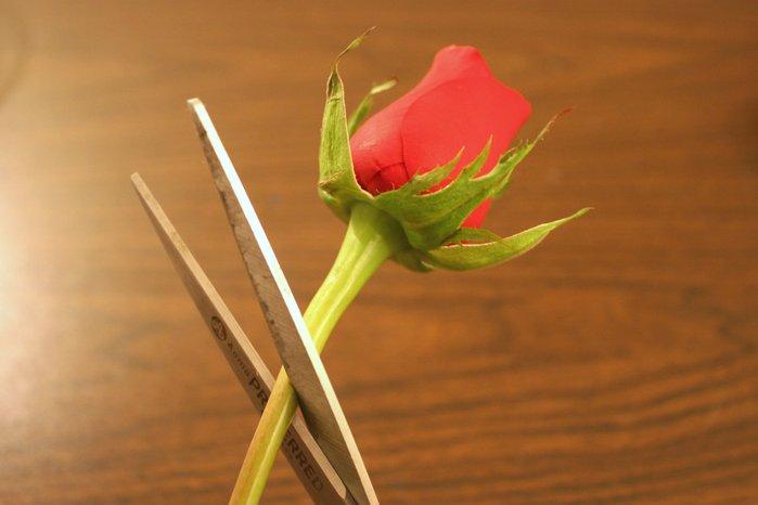 cắt bông hoa, để lại một đoạn cuống