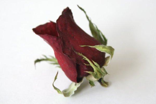 hoa hồng khô, vẫn giữ màu sắc và kế cấu tốt